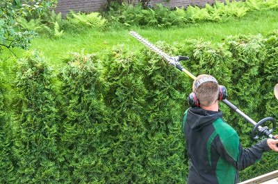 Hedge Removal Haslemere