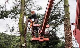 Tree removal Petersfield